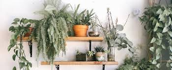 planten voor in je slaapkamer